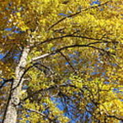 Tree 4 Poster