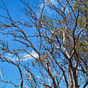 Tree 8 Poster