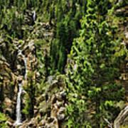 Tree Above Leavitt Falls  Poster