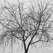 Tree Abstract In Black And White Poster