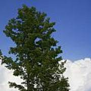 Tree Against A Cloudy Blue Sky In Vermont Poster