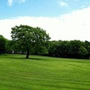 Tree Amidst Freshly Mowed Grass Poster