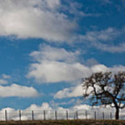 Tree And Fence On A Landscape, Santa Poster
