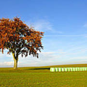 Tree And Hay Bales Poster