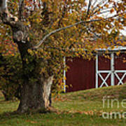 Tree And Red Barn Poster