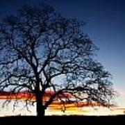 Tree At Sunrise Poster