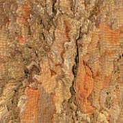 Tree Bark Abstract Poster
