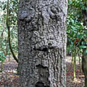 Tree Beard Poster