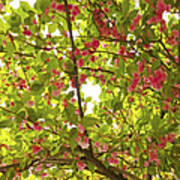 Tree Blossom 1 Poster