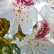 Tree Blossom Poster