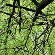 Tree Branches  Poster