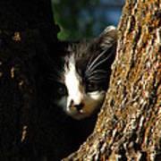 Tree Cat Poster