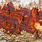 Tree Closeup - Wood Texture Poster