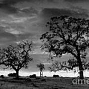 Tree Family In Black And White Poster