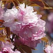 Tree Flower 01 Poster