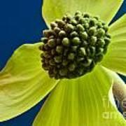 Tree Flower II Poster