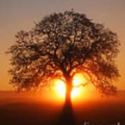 Tree Fog Sunrise Poster