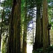 Tree Giants Poster