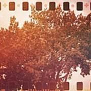 Tree Grunge Vintage Analog Film Poster