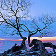 Tree Hanging Over Lake - Photographers Collection Poster
