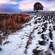 Tree In A Field  Poster by John Farnan