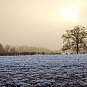 Tree In A Field On A Snowy Day Poster by Fizzy Image