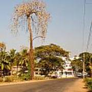 Tree In Goa Poster