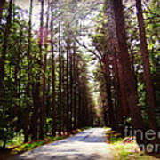 Tree Lined Road Poster by Crystal Joy Photography