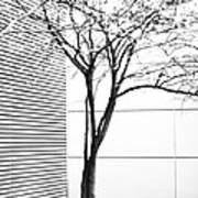Tree Lines Poster by Darryl Dalton