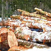 Tree Logs  Poster
