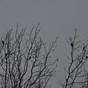 Tree Of Birds Poster