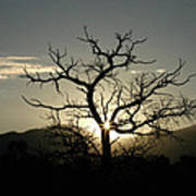 Tree Of Light Poster