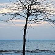 Tree On Beach Poster