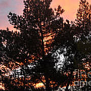 Tree On Fire Poster