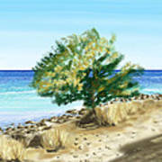 Tree On The Beach Poster