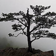 Tree On The Blue Ridge Parkway Poster