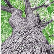 Tree Pen Drawing 4 Poster