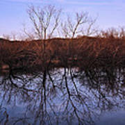 tree reflection on Wv pond Poster