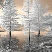 Tree Reflections Poster by Jane Linders
