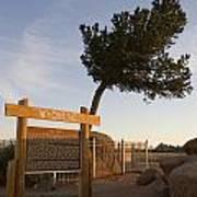 Tree Rock Wyoming Poster