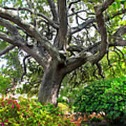 Tree Series 48 Poster