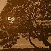 Tree Silhouettes Poster