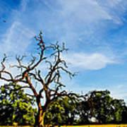 Tree Timestack Poster
