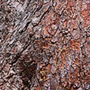 Tree Trunk Abstract Poster