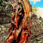 Tree Trunk Poster by Kathleen Struckle