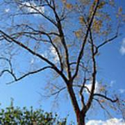 Tree Under Blue Sky Poster