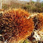 Tree Urchin Poster