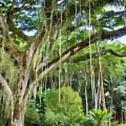 Tree-waimea Arboretum Poster