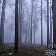 Trees Along Greenlake In Fog Poster