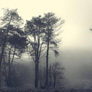 Trees And Fog At Castle Hill Poster
